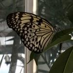 If you love butterflies, you'll love this place!