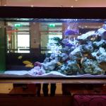 Strand Palace Hotel Interior 12 aquarium