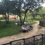 Disney's Animal Kingdom Lodge Foto