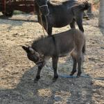 They have a new baby mule (3wks when we were there), horses, and dogs.