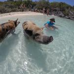 Swimming with the Pigs