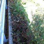 dead shrubbery fills the window boxes