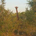 We saw 2 giraffes at our stay