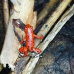 Red Frog Beach Foto