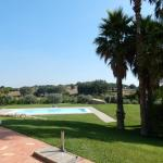 view of the pools and olive groves