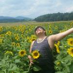 Field of sunflowers en route to Biltmore Estate winery
