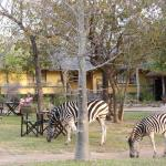 Thornhill Safari Lodge Foto