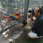 Macaws prior to being released back into the wild!