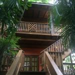 Our top floor suite nestled in the dense canopy made us feel like we were in a tree house. Amazi