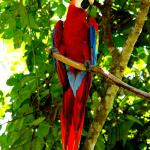 Macaw at Gaia Hotel