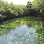 Green cenote, you can't swim in here