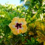 Just one of may beautiful flowers around the island