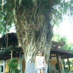 Big Old Tree in front of my cottage