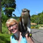 A Mona monkey we met on our island tour