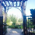 A hidden treasure in the middle of the woods