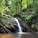 Grande Riviere is surrounded by lush, untouched rainforest with waterfalls and much more