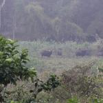 Wild View Home Stay Foto