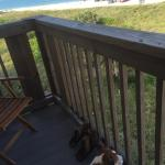 Our doggie enjoying the view