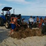 Italians and locales cleaning seaweed Agust 2015