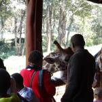 At the nearby giraffe park