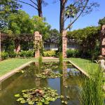 Pond in the stunning grounds, with terrapins, koi carp and dragonflies