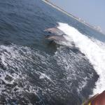 Thundercat Dolphin Watch Foto