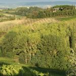 Tuscan vineyards in the region