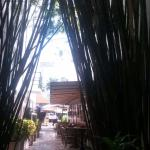 View of entrance to bamboo pool