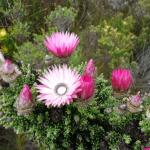 Photo de Grootbos Private Nature Reserve
