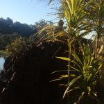 Nature at its finest! Review photos at blue cliffs retreat