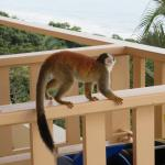 Another monkey on the stairwell