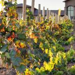 Photo of Embassy Suites by Hilton Temecula Valley Wine Country