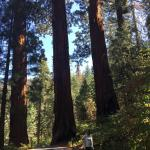 Photo of Lakes Trail in Sequoia National Park