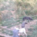 Foto di Howlers Inn Bed & Breakfast and Wolf Sanctuary