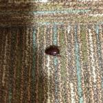 Roach in my room upon check-in.