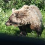 Yes, the grizzly was this close