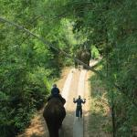 another guest heading out on their elephant tour