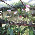 Hideaway orchid house