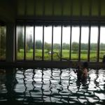 Indoor pool looking out to the horses
