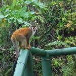 Monkey visitor on room patio.