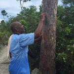 Rudy explains bark used by locals for medicine