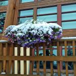 The landscaping and flowers are beautiful,  even in the snow.