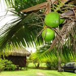 the well kept grounds and fresh coconuts