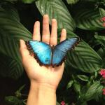 Butterfly landing on my hand