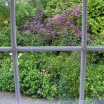 Garden view from bedroom
