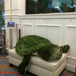 Meet Sophie the SeaTurtle in our Lobby