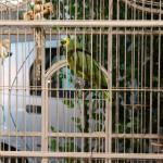 The parrot in front of the hotel