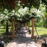 Covered walkway and gardens