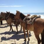Friendly horses on the beach for ride