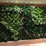 Living Wall on 11th floor completed on September 25
